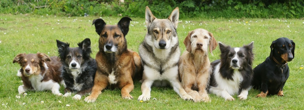 Canine Companions, Large And Small!