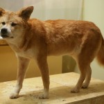 The Most Common Dog Breeds in Asia